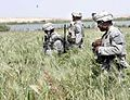 Soldiers from Company A, 4th Battalion, 23rd Infantry Regiment by the Euphrates River in western Iraq during Operation Florida Cracker.jpg