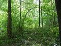 Sous-bois de la forêt de Bannoncourt.JPG