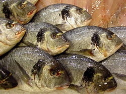 gröna musslor wikipedia