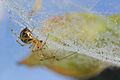 Spider dew.jpg