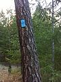 Spokane, WA, USA - panoramio (23).jpg