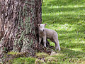 Spring Lamb (7352984444).jpg
