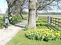 Spring at Normandie Stud - geograph.org.uk - 1204752.jpg