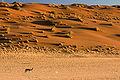 Springbok Antelope Sossusvlei Namib Desert Namibia Luca Galuzzi 2004.JPG