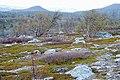 Stabbursdalen National Park - 3.jpg