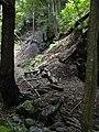Starr-040828-0026-Eucalyptus sp-trail building-Makawao Forest Reserve-Maui (24420525720).jpg
