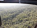 Starr-091217-0538-Polyscias oahuensis-aerial view habitat-Koolau Forest Reserve-Maui (24965808906).jpg