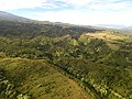 Starr-141014-2258-Syzygium cumini-aerial view-Haiku-Maui (25129056732).jpg