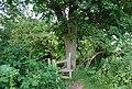 Stile on the High Weald Landscape Trail near Matfield - geograph.org.uk - 1360448.jpg
