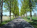 Straße am Kanal von Hertefeld nach Nauen - panoramio.jpg