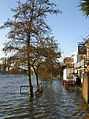 Strand-on-the-Green flooded at City Barge - portrait.jpg