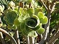 Strange Plant.jpg