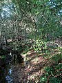 Stream, Ruffets Wood - geograph.org.uk - 1530303.jpg