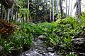 Stream Through Rainforest in Port Douglas.jpg