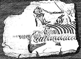 Plesiosauria - First published plesiosaur skeleton, 1719