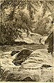 Summer excursion routes through the most picturesque scenery in America. Seaside, forest, camp and watering place (1881) (14778989473).jpg