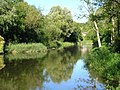 Summer fly fishing on the River Avon - geograph.org.uk - 70170.jpg