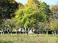 Sumy-239 Плодовый сад..JPG
