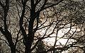 Sun behind mist and trees (3300680414).jpg