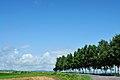 Sunny hill - panoramio.jpg