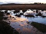 File:Surface water, Stephill Bottom mire, New Forest - geograph.org.uk - 291831.jpg