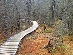 Swampy But Pretty Bog In Fiordland NZ.jpg
