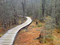Swampy But Pretty Bog In Fiordland NZ.jpg