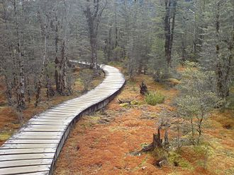 Boardwalk - A typical nature boardwalk, carrying walkers over wetlands on the Milford Track, New Zealand.