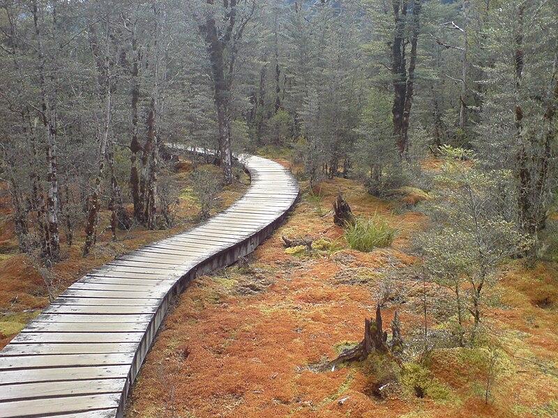 File:Swampy But Pretty Bog In Fiordland NZ.jpg