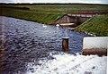 Swans on the lower subsiding reservoir - geograph.org.uk - 1139046.jpg