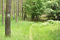 Szlak zielony Gleboczek Lopuchowo, Puszcza Zielonka (4).JPG