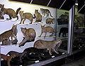 T.Ivanausko zoologijos muziejus3, 2006-12-02.jpg