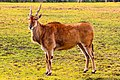 Taronga Western Plains Zoo IMG 0603 (40648433930).jpg