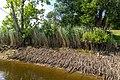 Technisch-biologische Ufersicherung an der Wümme, Versuchsstrecke 2 (50678706761).jpg