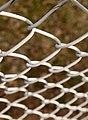 Tennis court net.jpg