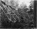 The 80 ft Ockerson Hights tower, built in 1903, blown down from wind - NARA - 285983.tif