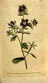 The Botanical Magazine, Plate 102 (Volume 3, 1790).png