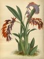 The Orchid Album-02-0018-0053.png
