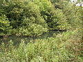 The Pocklington Canal (disused) - geograph.org.uk - 573698.jpg
