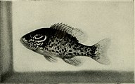 The complete aquarium book; the care and breeding of goldfish and tropical fishes (1936) (20678325841).jpg