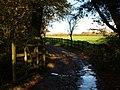 The drive to Heathfield Down - geograph.org.uk - 281605.jpg