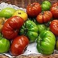 Tomates Marmalin 2017 A3.jpg