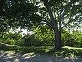 Tornparken, Sundbyberg, 2018k.jpg
