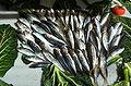 Trachurus trachurus fish 7218 Nevit.JPG