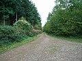 Track into Hope Wood - geograph.org.uk - 267991.jpg