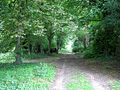 Track into woodland adjoining St Mary's church - geograph.org.uk - 1399019.jpg