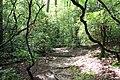 Trail in Paris Mountain State Park, June 2019.jpg