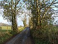 Tree-lined lane, near St. Arvans - geograph.org.uk - 1572957.jpg