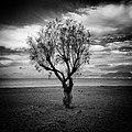 Tree (87635341).jpeg