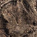 Tree Rings - Flickr - Me in ME.jpg